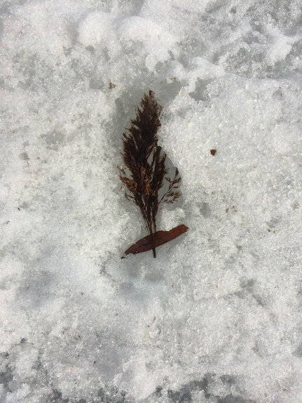 stanton_leaf-in-snow